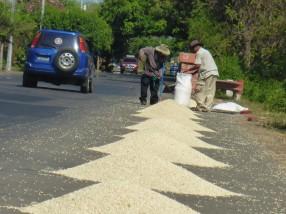 Maistrocknung auf der Strasse.