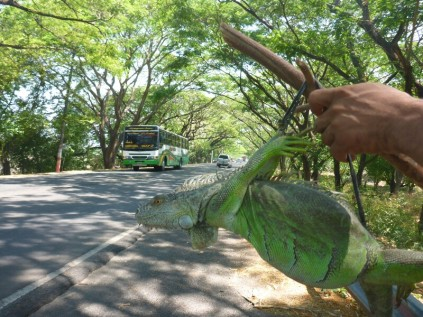 Verbotener Leguanhandel