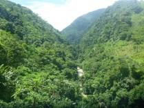 Natur pur auf dem Weg nach Medellin.