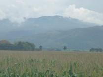 Im Caucatal wird die landwirtschaftliche Flaeche fuer Mais und Zuckerrohr verwendet.